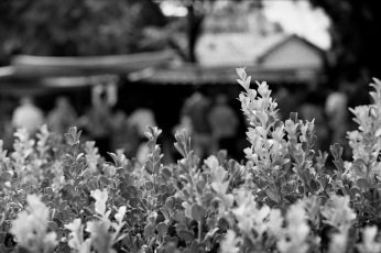 Analógicas: La cercania de las hojas