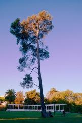 Exteriores: El árbol