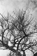 Analógicas: Las ramas