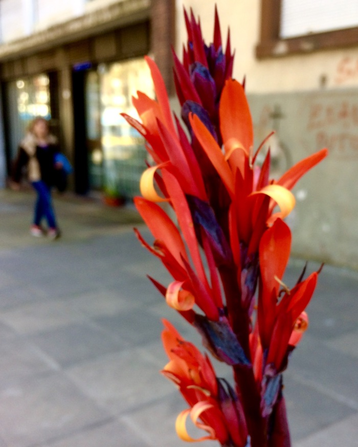 Blog: Flores