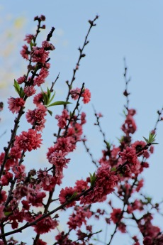 Exteriores: Flores